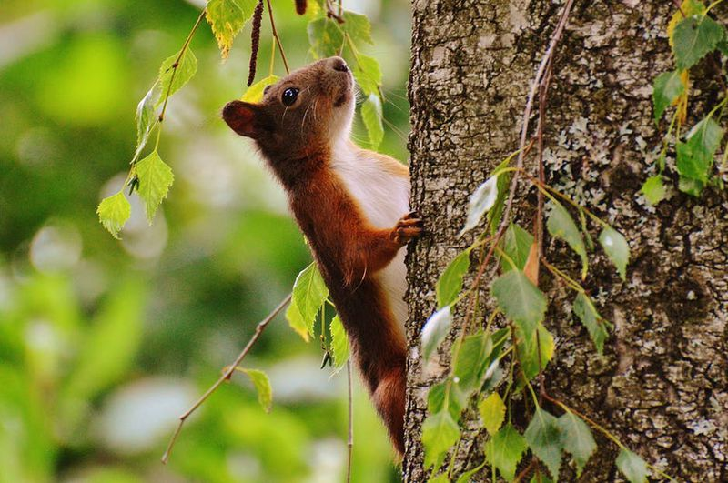 Ein Eichhörnchen trifft auf eine Katze. Was dann passiert, ist göttlich!
