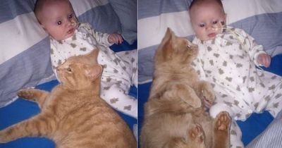 Der kleine Isaac hat ein krankes Herz - doch Katze Siggy will helfen