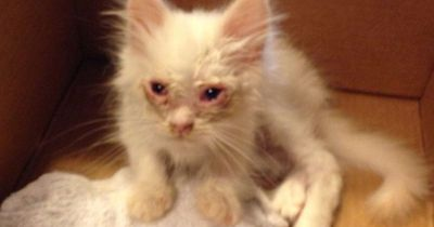 Sie retten eine Katze - und die legt eine unglaubliche Verwandlung hin!