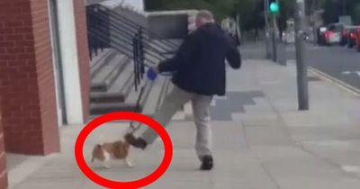 Als sie sehen, wie der Mann dem kleinen Hund ins Gesicht tritt, sind sie sprachlos.