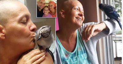 Dieser Blauhäher besucht jeden Tag die Frau, die ihn rettete