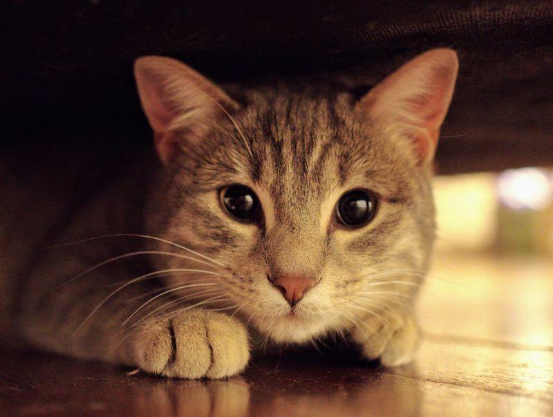 Die Katze denkt, Frauchen ertrinkt in der Wanne...
