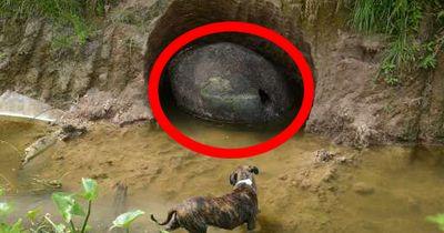 Er findet ein gigantisches Ei. Was es wirklich ist, erstaunt die Wissenschaft