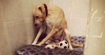 """Das wurde aus dem """"traurigsten Hund der Welt""""!"""