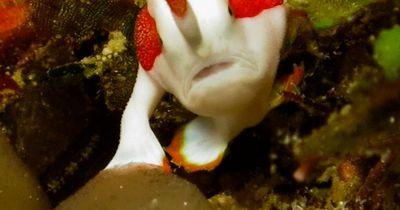 Dieser Fisch läuft auf Beinen - unter Wasser!