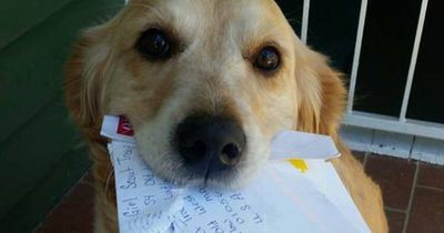 Diese Hündin liebt ihren Postboten!