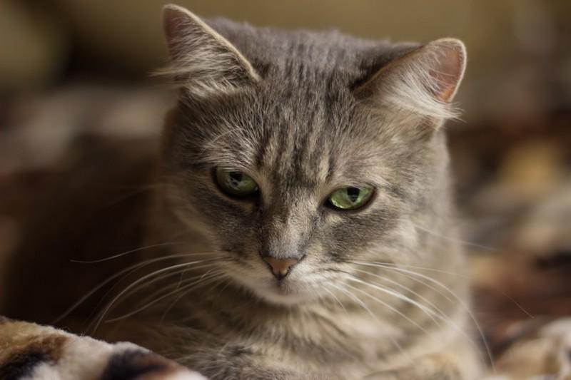 Dieses Bild zeigt eine Katze, deren Gestik eine bestimmte Bedeutung hat.