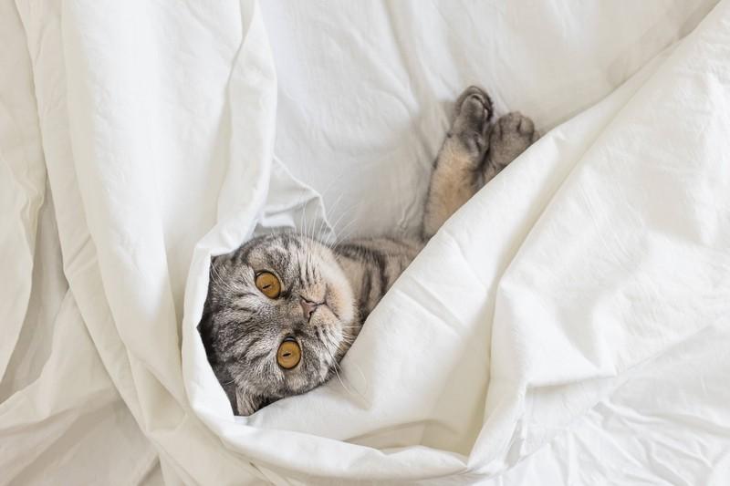 Dieses Bild zeigt eine Katze, die schnurrt.