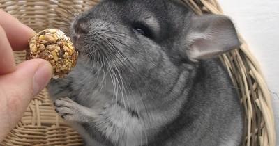 Ausgefallene Haustiere - Besondere Arten für Liebhaber