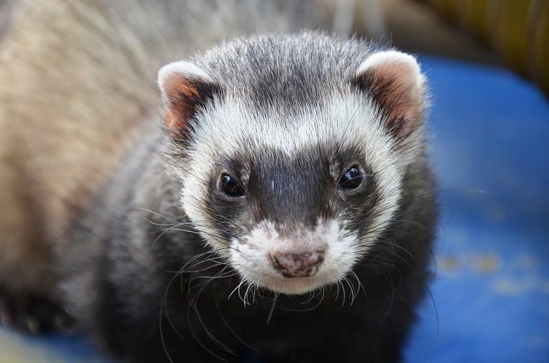 Ausgefallene Haustiere Besondere Arten Fur Liebhaber