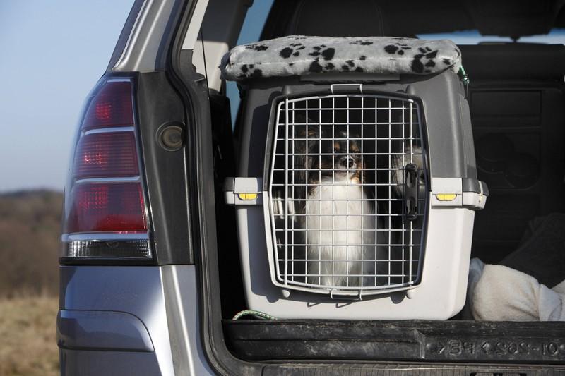 Während der Fahrt: Pausen für Hund und Mensch