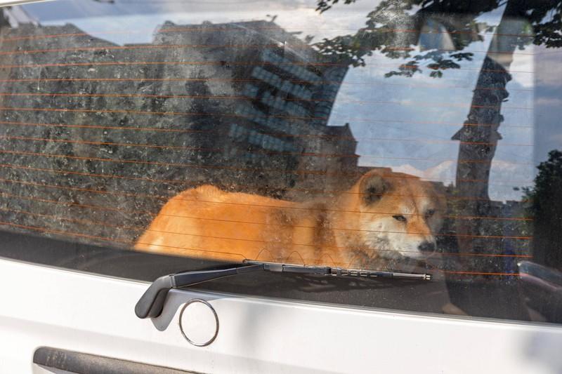 Wenn es sich an der Raststätte nicht vermeiden lässt, den Hund alleine im Auto zu lassen, sollte das Auto an einem schattigen Platz parken.