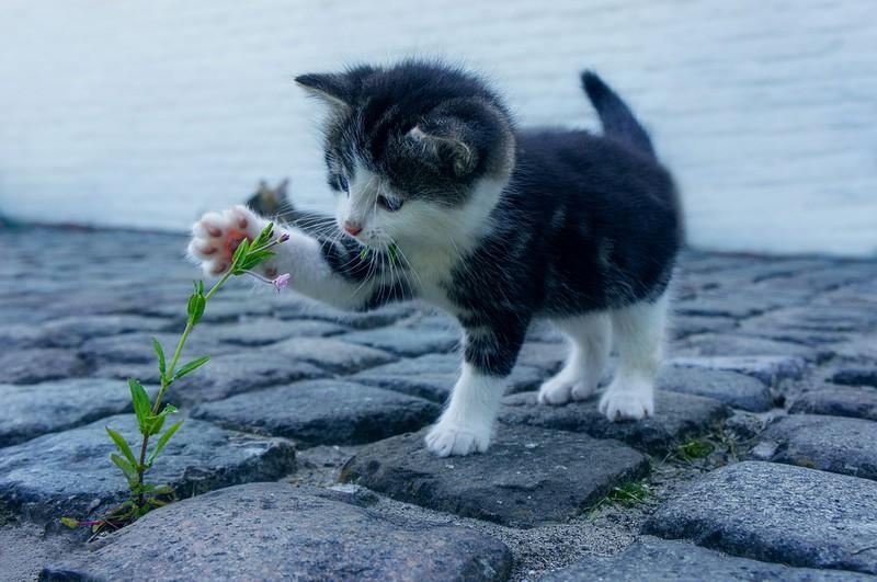 Man sieht eine Katze und es geht um Tipps für Katzen im Sommer.