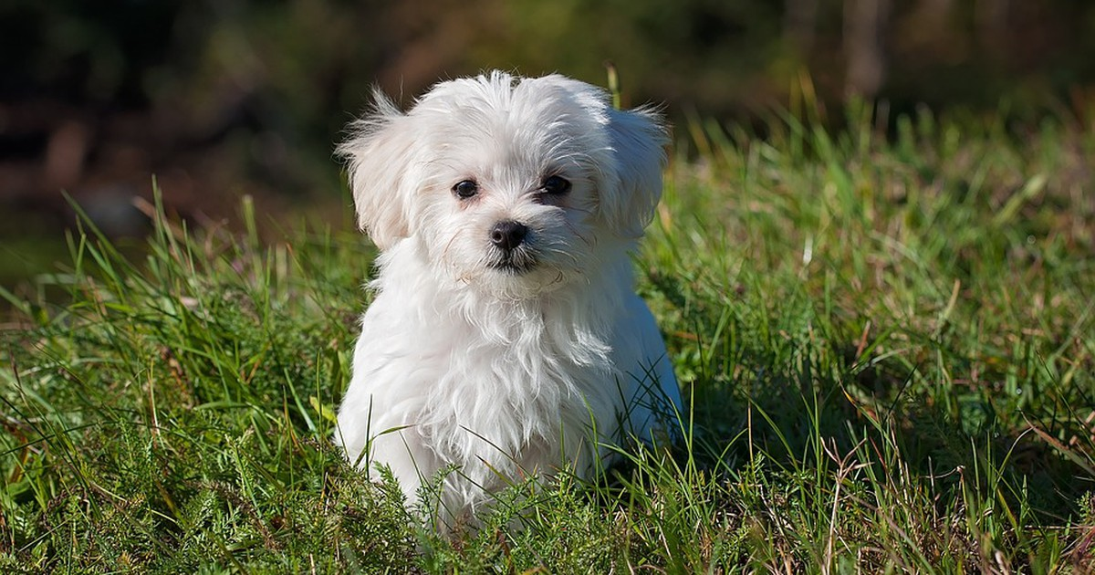 Reisen mit Hund: So sorgst du dafür, dass dein Hund sich im Flugzeug wohlfühlt