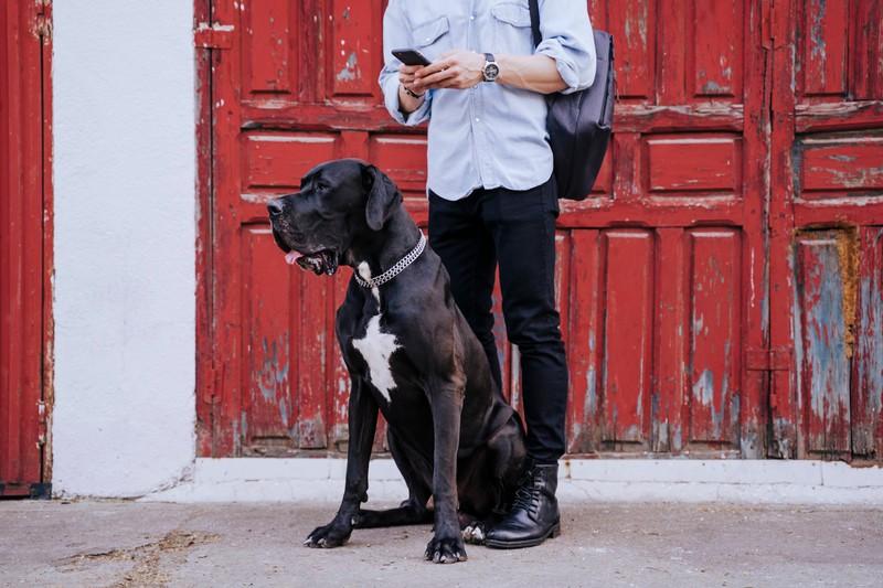 Die Vorbereitung ist sehr wichtig, damit dein Hund stressfrei mit dir reisen kann.