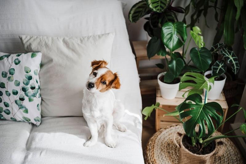 Dieses Bild zeigt einen Hund, der drinnen ist.