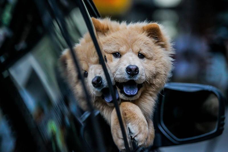 Dieses Bild zeigt einen Hund im Auto.