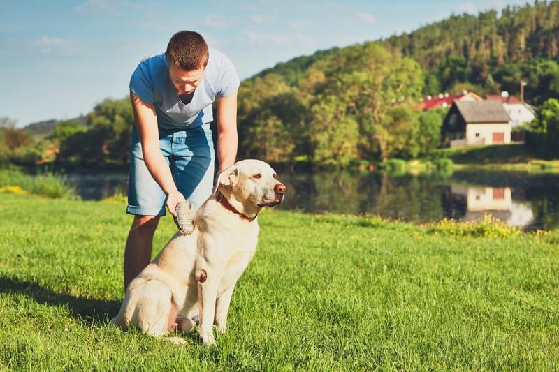 Dieses Bild zeigt einen Hund mit langem Fell, der potentiell viel haart.