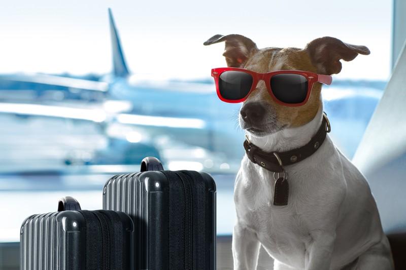 So übersteht dein Hund einen langen Flug