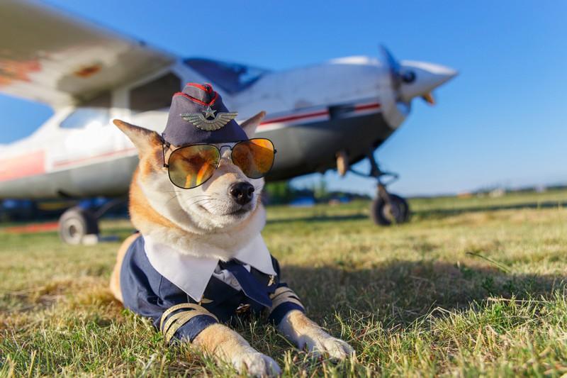 Dieses Bild zeigt einen Hund auf Reisen.