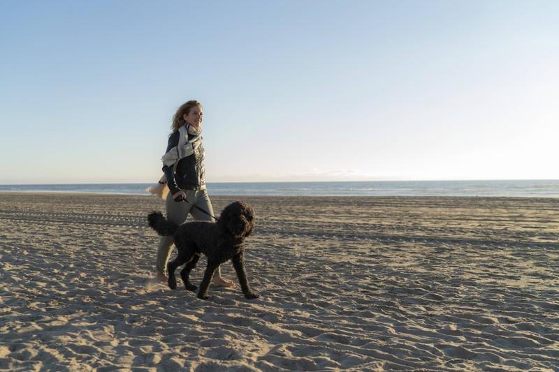 Die Hunde in den Niederlanden genießen ein gutes Leben.