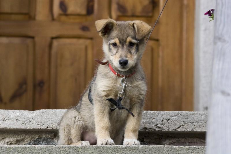 Dieses Bild zeigt einen Hund in Polen, ein besonders hundefreundliches Land.