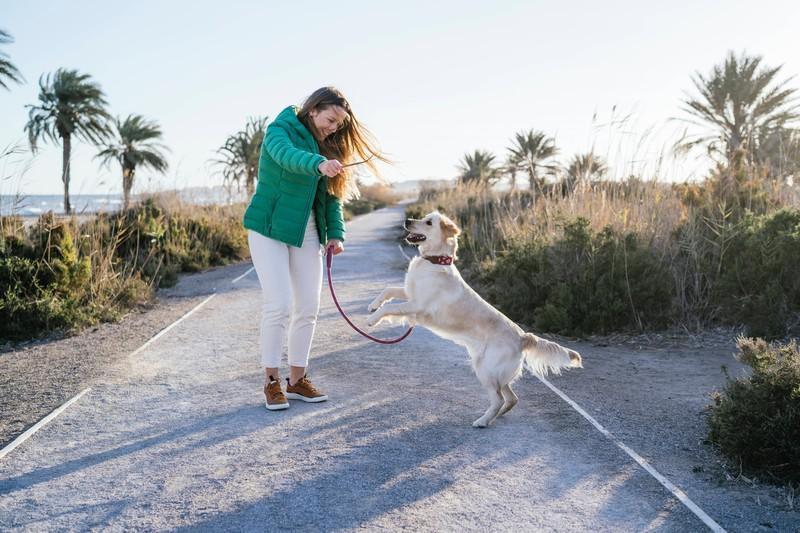 Dieses Bild zeigt einen Hund in Spanien, ein besonders hundefreundliches Land.