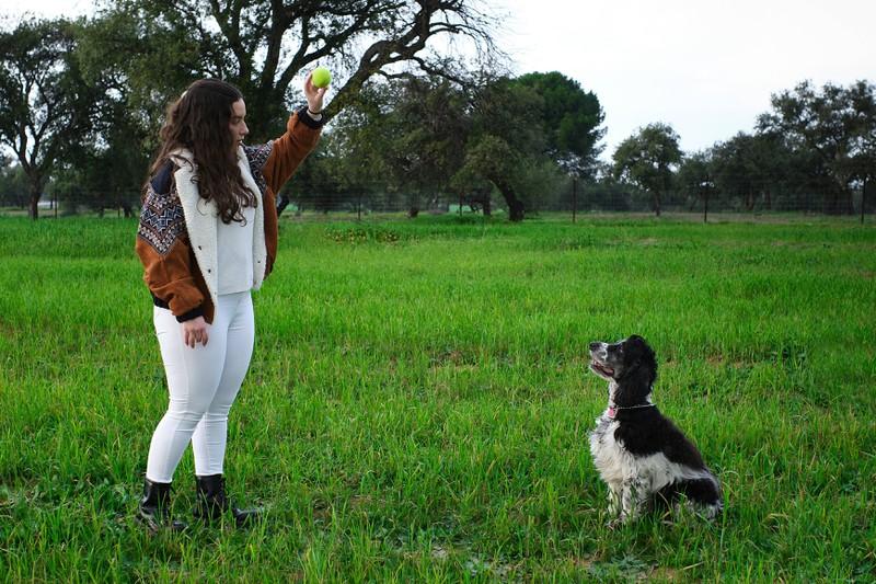 Man sieht Hunde und es geht um Dinge, die man bei zwei Hunden beachten muss.