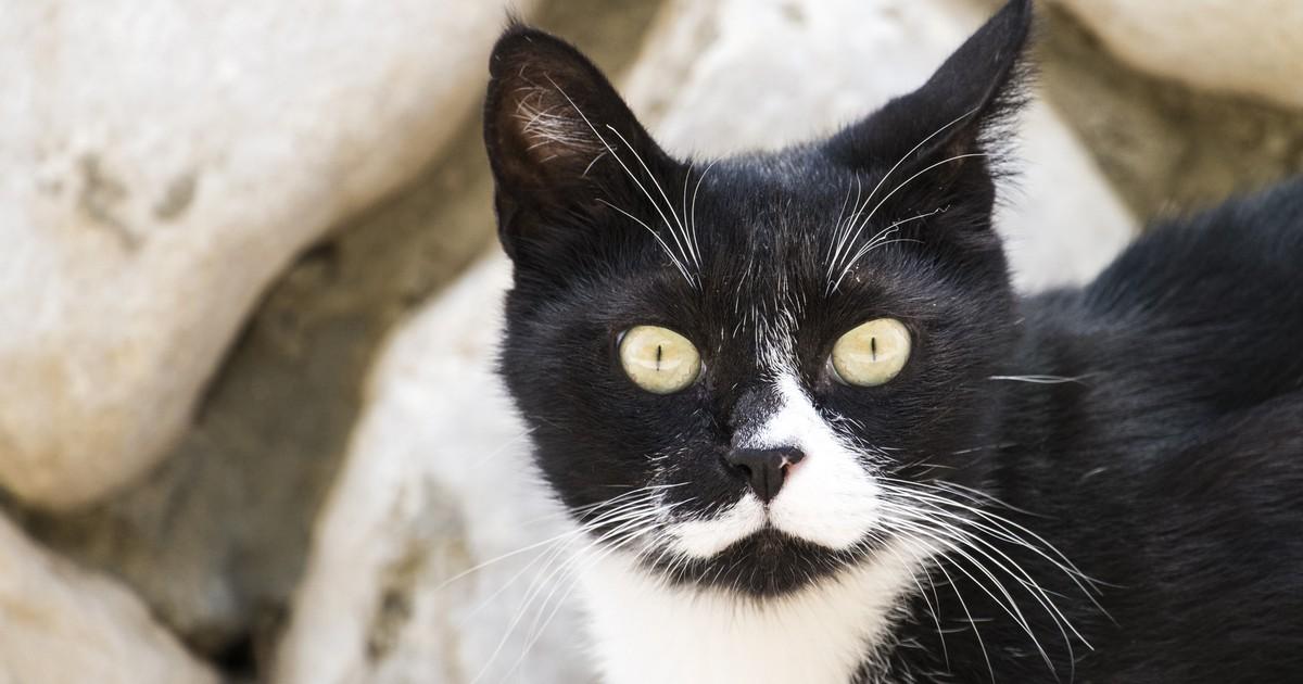 Fakten: 15 Dinge, die jeder über Katzen wissen sollte