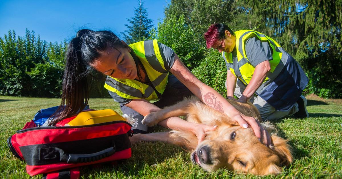 Erste Hilfe für deinen Hund: Das solltest du tun, wenn es ihm nicht gut geht