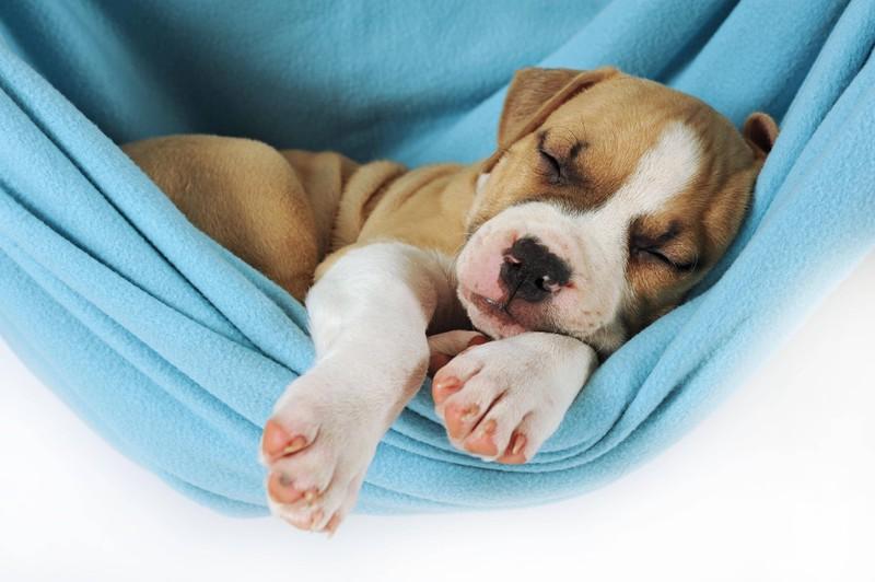 Ein schlafender Hund