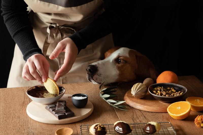 Hund, der keine Schokolade verträgt