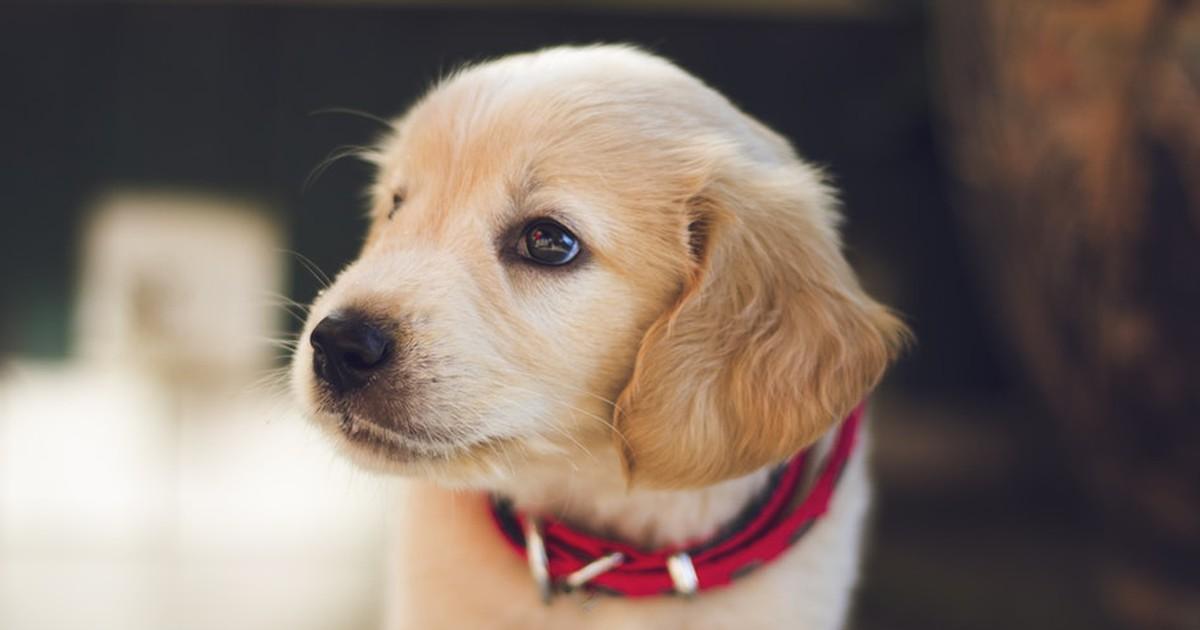 10 Dinge, die jeder über Hunde wissen sollte