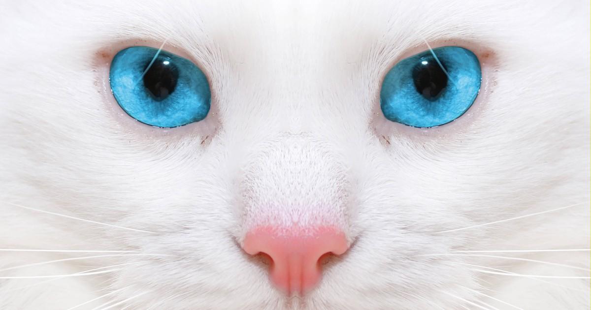Katzen-Quiz: Erkennst du die Katzenrasse anhand von einem Bild?