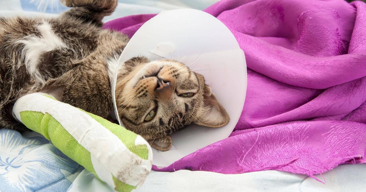 Das solltest du wissen: Erste Hilfe für deine Katze!