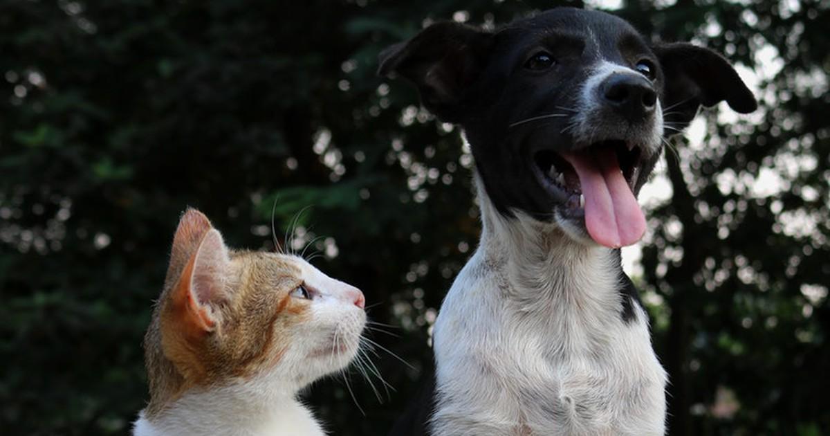 4 Dinge auf die du achten solltest, wenn du Hund und Katze hältst