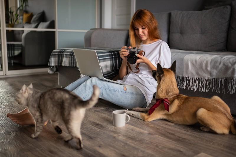 Hund und Katze, die einander genau betrachten