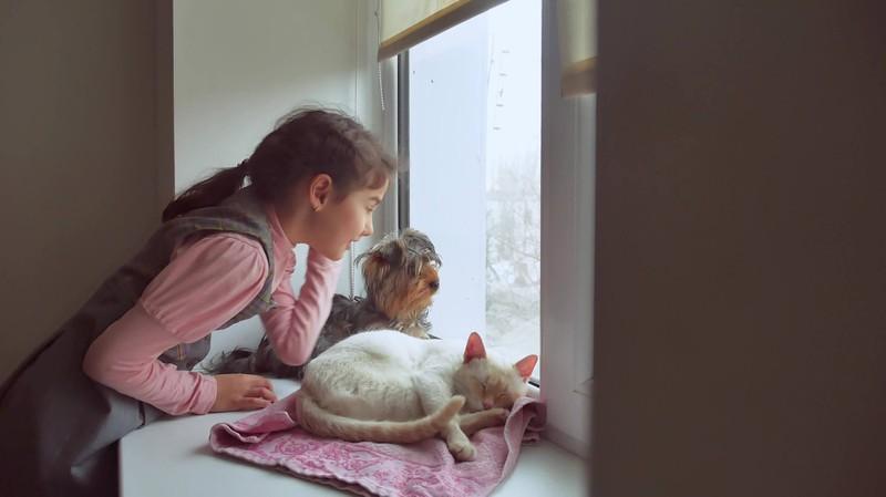 Hunde und Katzen sollten für ihr gutes Verhalten belohnt werden