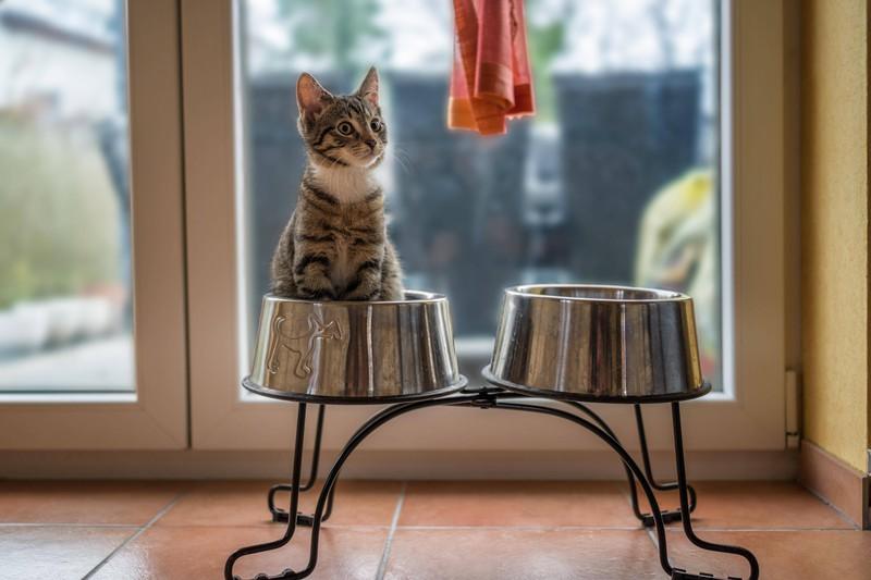 Hundenapf, der getrennt vom Futter der Katze aufgestellt werden sollte