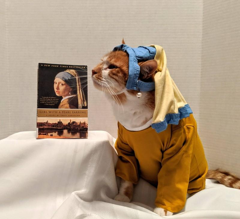 Eine Katze, die mit verschiedenen Accessoires ausgestattet und verkleidet ist