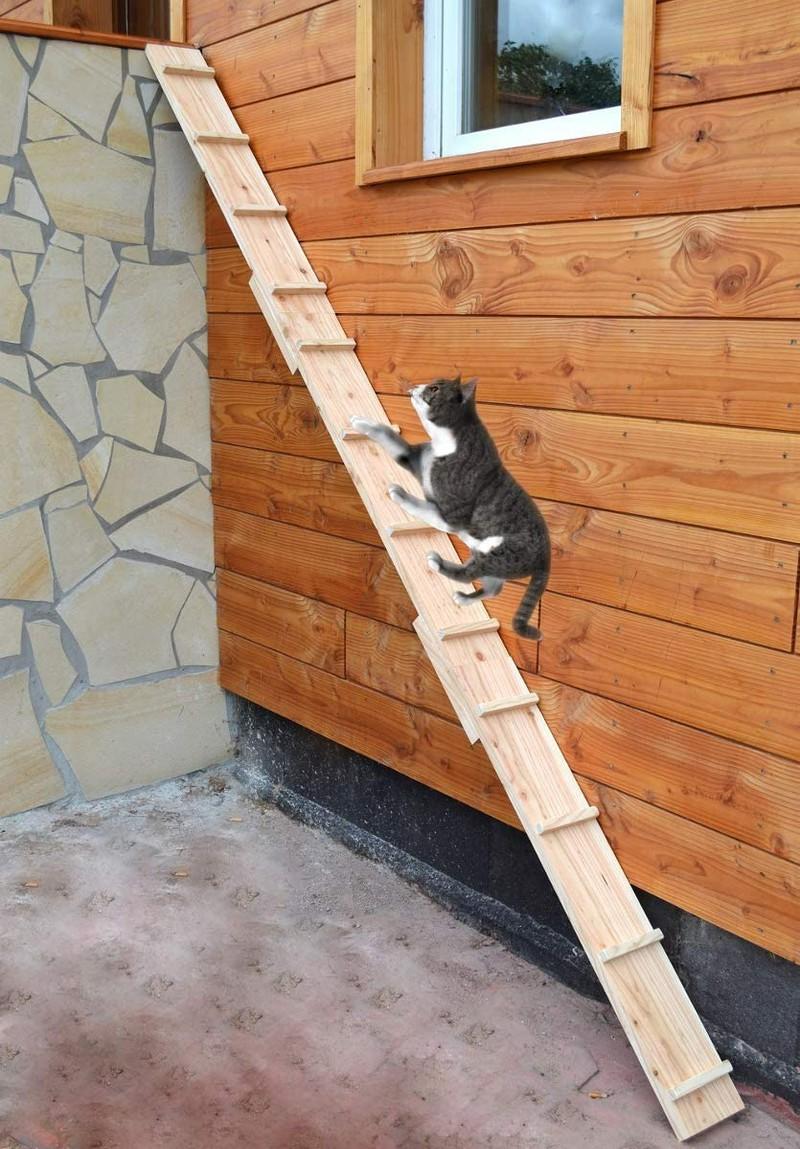 Katze balanciert über Katzenleiter
