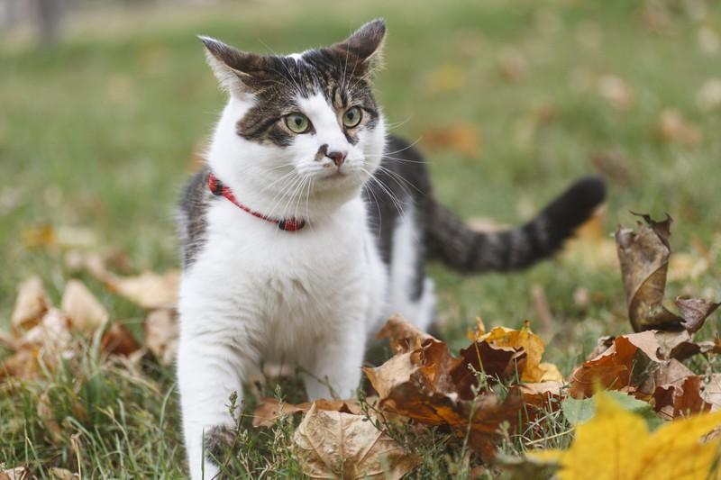 Katze im Garten mit Halsband