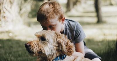 Haustiere, die am besten für Kinder geeignet sind