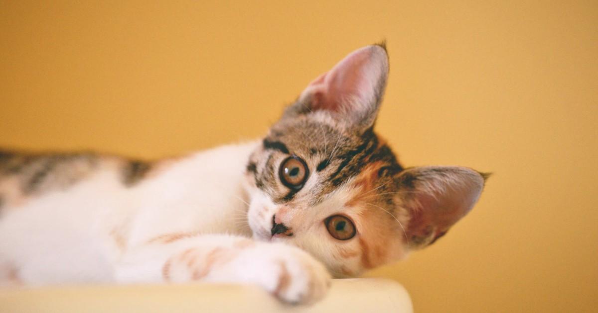 10 schöne Katzennamen, die du deiner Katze geben willst