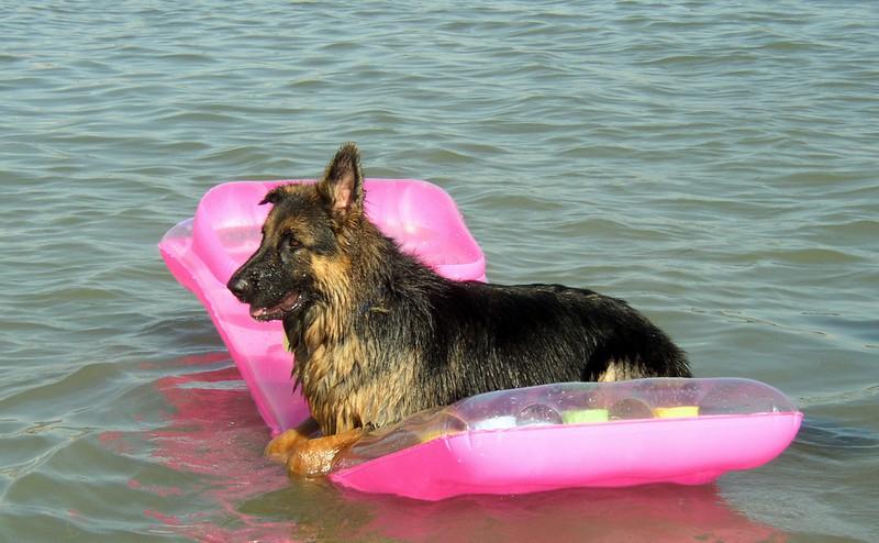 Auch bei Hitze sollte man auf seinen Hund aufpassen. Denn es kann total heiß werden