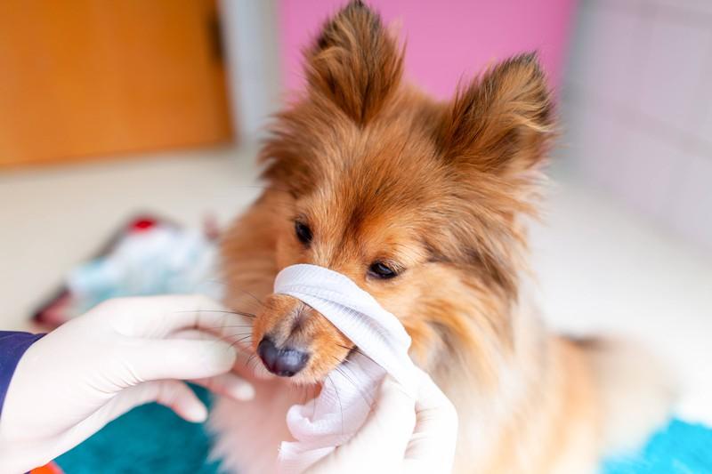 Dieser Hund wird mit dem Erste-Hilfe-Koffer verarztet