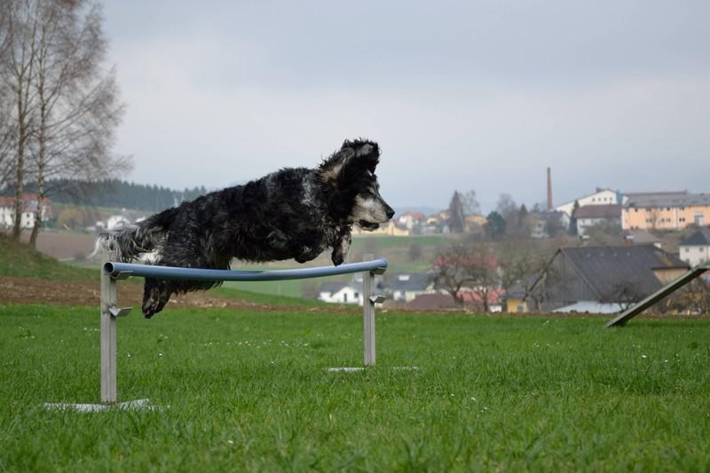 Ein Hund, der zur Hundeschule geht.