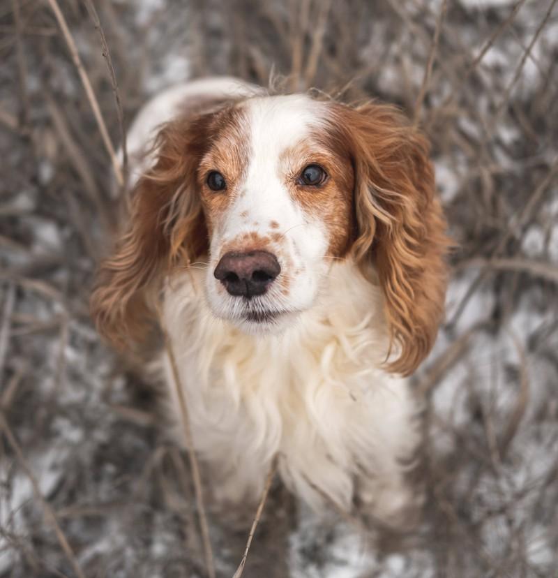 Alba ist ein schöner Hundename mit einer tollen Bedeutung.