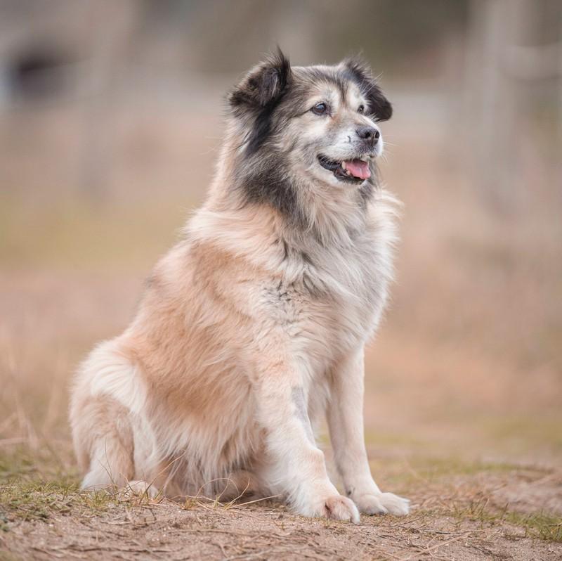 Dein Hund sieht aus wie ein kleiner Bär? Dann passt der Name Bruno perfekt!