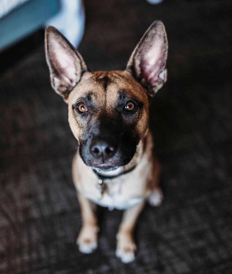 Der perfekte Hundename für ein Mädchen: Maja.